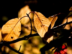 Autumn - Light, by Christian Weidinger on Flickr, licensed under Creative Commons